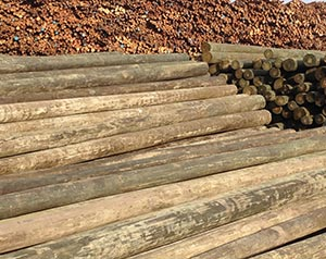 Piling, Poles & Posts | Southern Pine Lumber Company